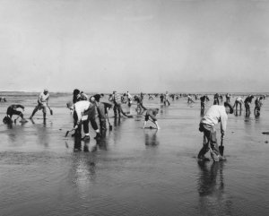 wsa_clamming_ca1960